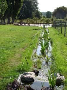 Planthago kruidentuin for Natuurlijke vijver maken